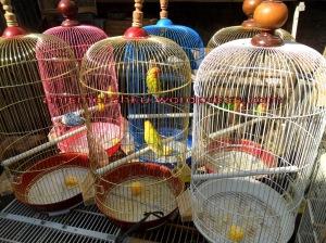 Kisaran harga burung di sukahaji � ANIS MERAH